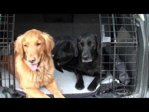 Urlaub Mit Hund Autofahrt - Reisen Mit Hund Im Auto - Tipps Für Den Hundeurlaub