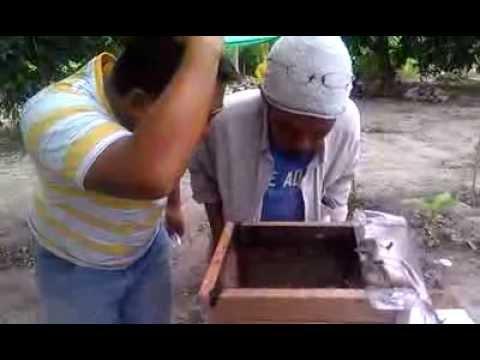 Pengusaha Madu Lebah Kelulut Dari Air Kuning, Negeri Sembilan