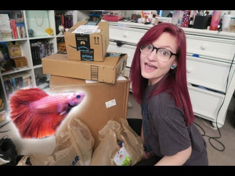 HUGE Betta Fish Haul! | Alyssa Nicole |