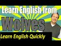 English Listening Lesson from Wolves: Practice Your English Comprehension with this Viral Video