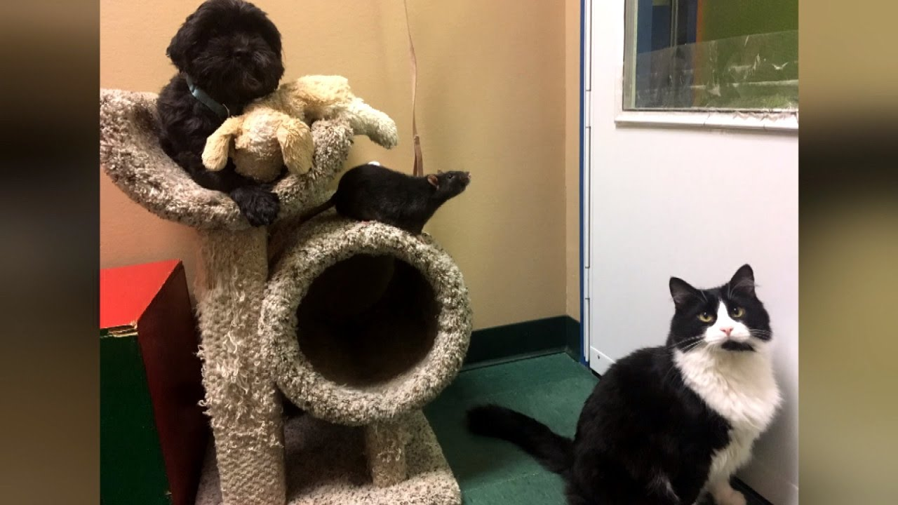 Rescued Cat, Rat and Dog Just Can't Be Apart at Shelter After Becoming Friends