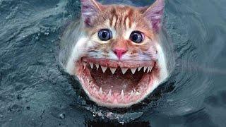 Самые ЗАГАДОЧНЫЕ морские существа! Топ неизведанных морских существ снятых на камеру!