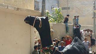 Angry Black Camel Runs Away During Qurbani in PIB Colony | Danger Camel Qurbani Eid ul Adha Part 2/3