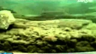 [BMTK] Kho báu dưới đáy biển _P1