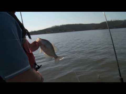 Crappie Fishing on Lake Barkley