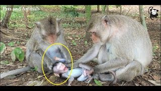 why mommy do like this to her baby ? mommy pull her baby's hair Pets and Animals 225