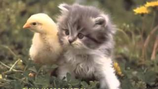 Pshine katitu