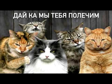 Коты, почему мы их любим_ [SLIVKI SHOW]_HD.mp4