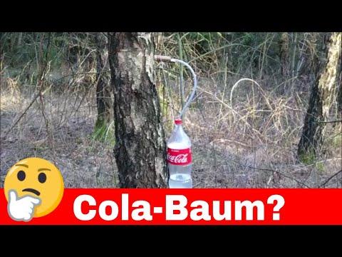 [Wissen] Warum hängen Flaschen im Wald? - Birkenwasser - Gesundheit - Ernährung