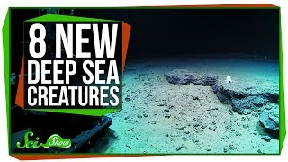 8 Strange New Deep Sea Creatures