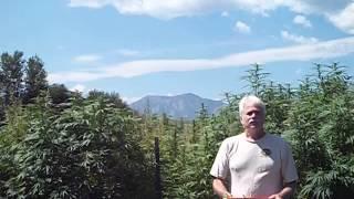 Richard Rose Hemp Bucket Challenge