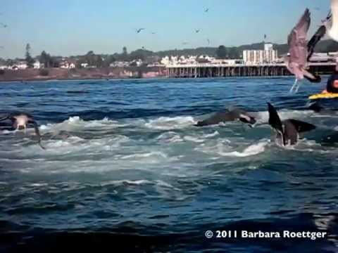 Slow Motion- Surfer Almost Swallowed by Whale