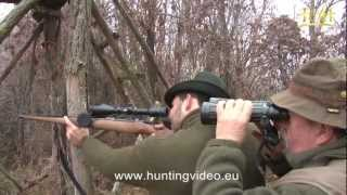 Wild Boar Hunting In Hungary Nyim (HD).mpg
