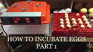 HOW TO INCUBATE CHICKEN EGGS STEP BY STEP!!!!