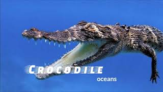 Top 10 Most Dangerous Animals And Their Origin Countries