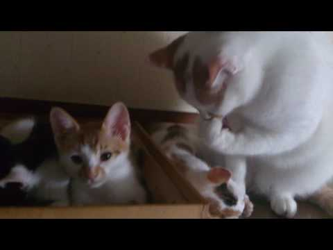 子猫と家の末っ子(2016.06.29)