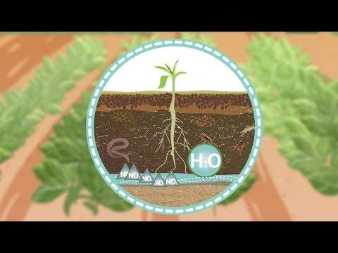 Folge 7 – Zoom+ – Bonares Inplamint: Dressierte Mikroben für einen fruchtbaren Boden