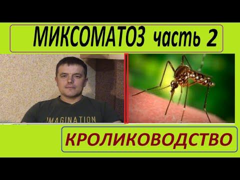 МИКСОМАТОЗ часть2