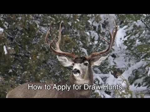 How to Apply for Draw Hunts