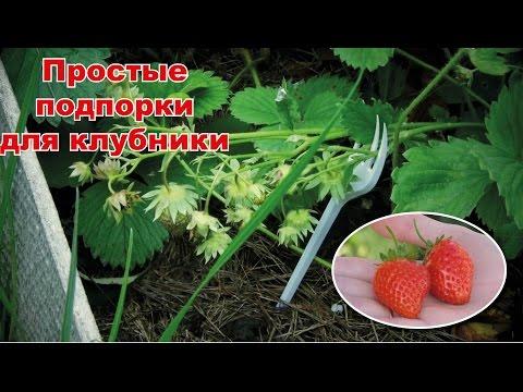 «Подпорки» для ягод клубники-земляники своими руками: чтобы не гнили