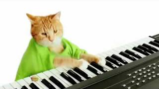 Keyboard Cat #39;s World Series Wonderful Pistachios Commerc