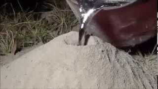 Que pasa si tiras aluminio hirviendo dentro de un hormiguero
