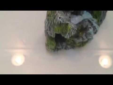 Hexbugs aqua