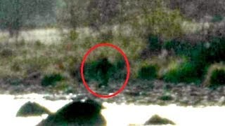 Cryptids and Monsters (NEWS):  Latest viral Bigfoot photo, near Avocado Lake!