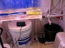 My Poison Dart Frog Room