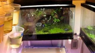 My Poison Dart Frog Room