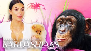 "6 Times Animals Stole The Show On ""KUWTK"" 