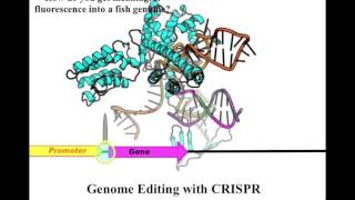 Zebrafish Centre for Advanced Drug Discovery