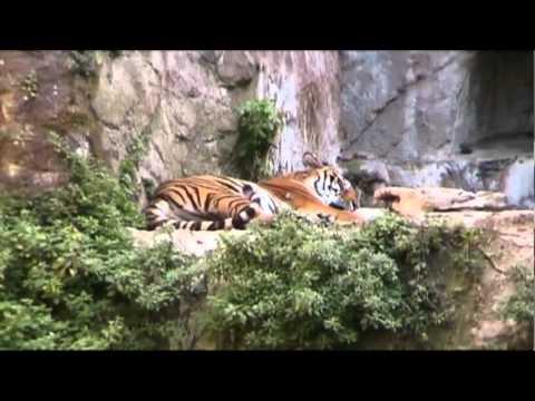 Un Pomeriggio al Bioparco (2007) – Documentario amatoriale – Parte 2di3
