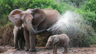 Elephant Spraying Water | FREE JIGSAW PUZZLE DOWNLOAD | ALL HD IMAGES
