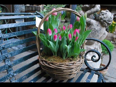 Сажать тюльпаны в доме 183