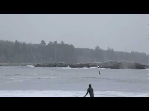 Orcas chase surfers out of the water!