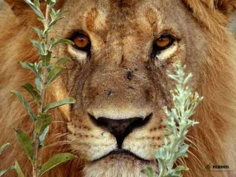 Africa ... paisajes y animales - YouTube