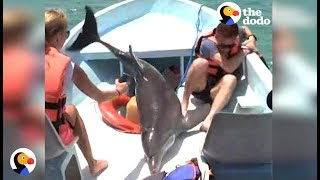 Dolphin JUMPS ON BOAT | The Dodo