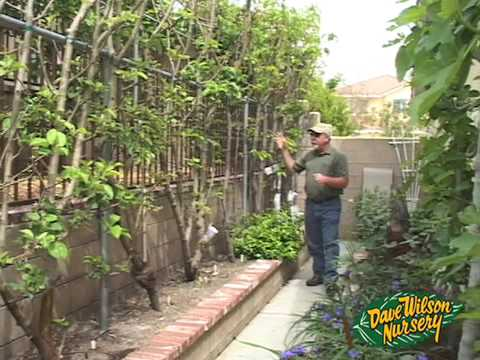 Greenhouse Garden Beds