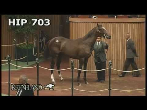 Zenyatta at the 2005 September Yearling Sale