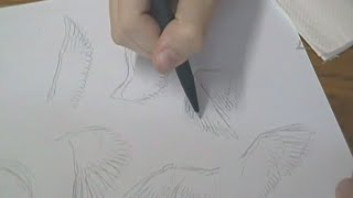 Tutorial - Como desenhar pássaros / How to draw birds