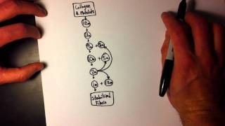 Easy Coagulation Cascade (1 of 2) - Simple & easy to remember