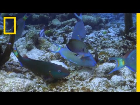 So Much Change, So Little Time | Sea of Hope: America's Underwater Treasures