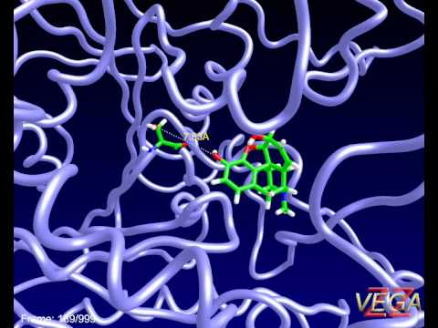 Human carboxyl esterase 1 (hCES1) complexed with morphine