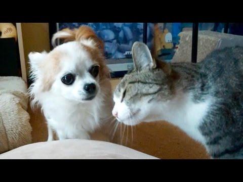 猫のしつこい頭突きに怒る犬