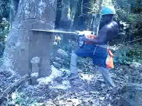Tree Felling -chainsaw  Safety, West Africa Style video