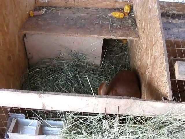 Как сделать домик для беременной крольчихи 38