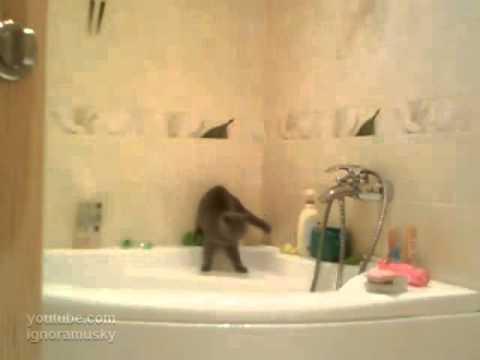 Gatos - Gato resbala en el baño