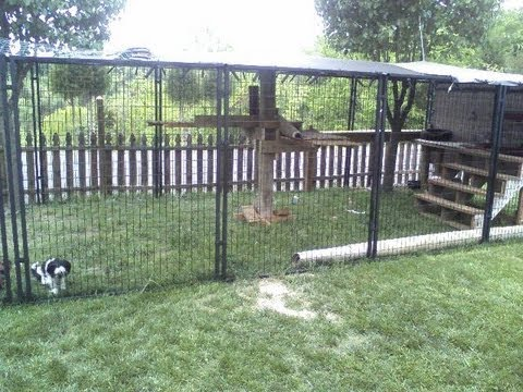 Easy To Make Outside Cat Enclosure With Petsafe Dog
