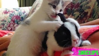 Cat Cuddle With  Rabbit ✯ Funny Animals Compilation